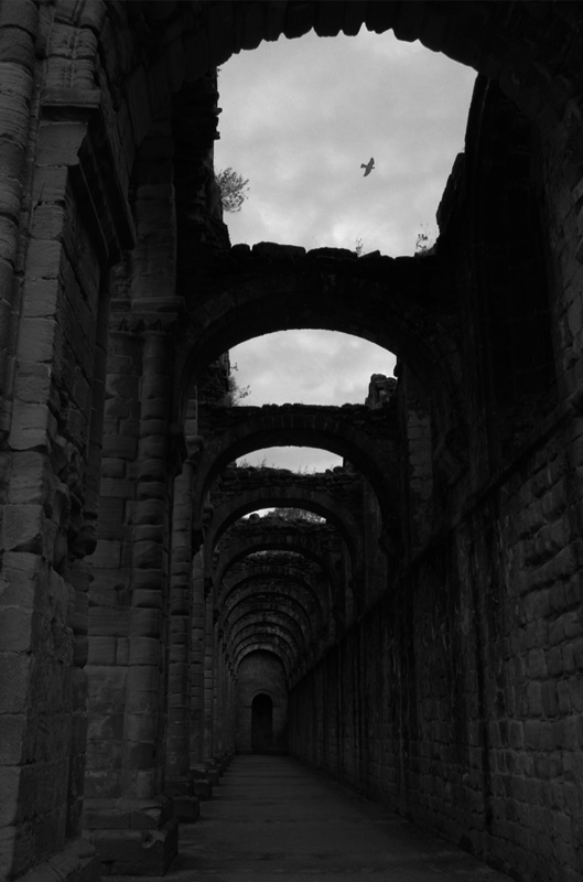 Fountains abbey III